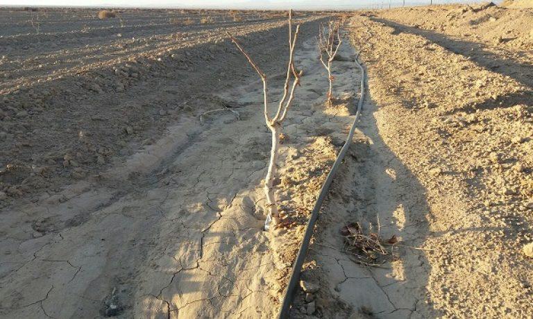 پیشرفت ۸۰درصدی اجرای پروژه آبیاری تحت فشار باغات پسته  در شرکت کشت و صنعت پیوند خاوران