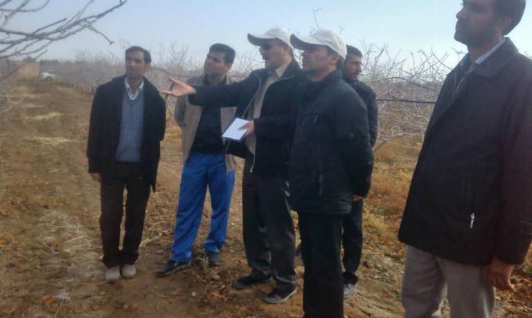 برگزاری دوره آموزشی مدیریت باغات پسته در شرکت کشت و صنعت پیوند خاوران