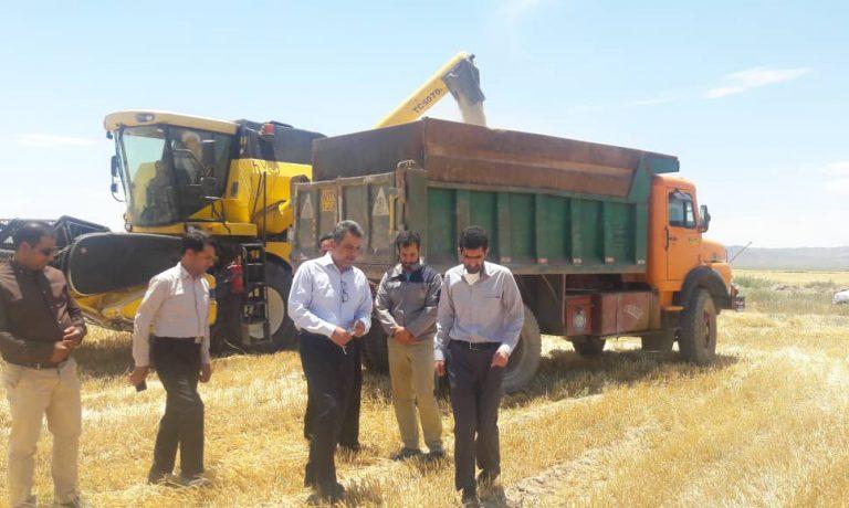 بازدید عضو هیئت مدیره هلدینگ کشاورزی و دامپروری بنیاد مستضعفان از پروژه شترداری و اولین سایت تولید علوفه خارشتر در کشور